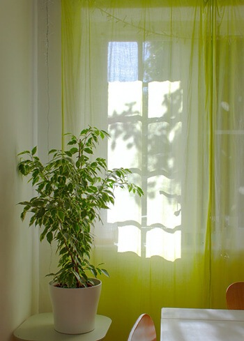 Add indoor plant for better ventilation