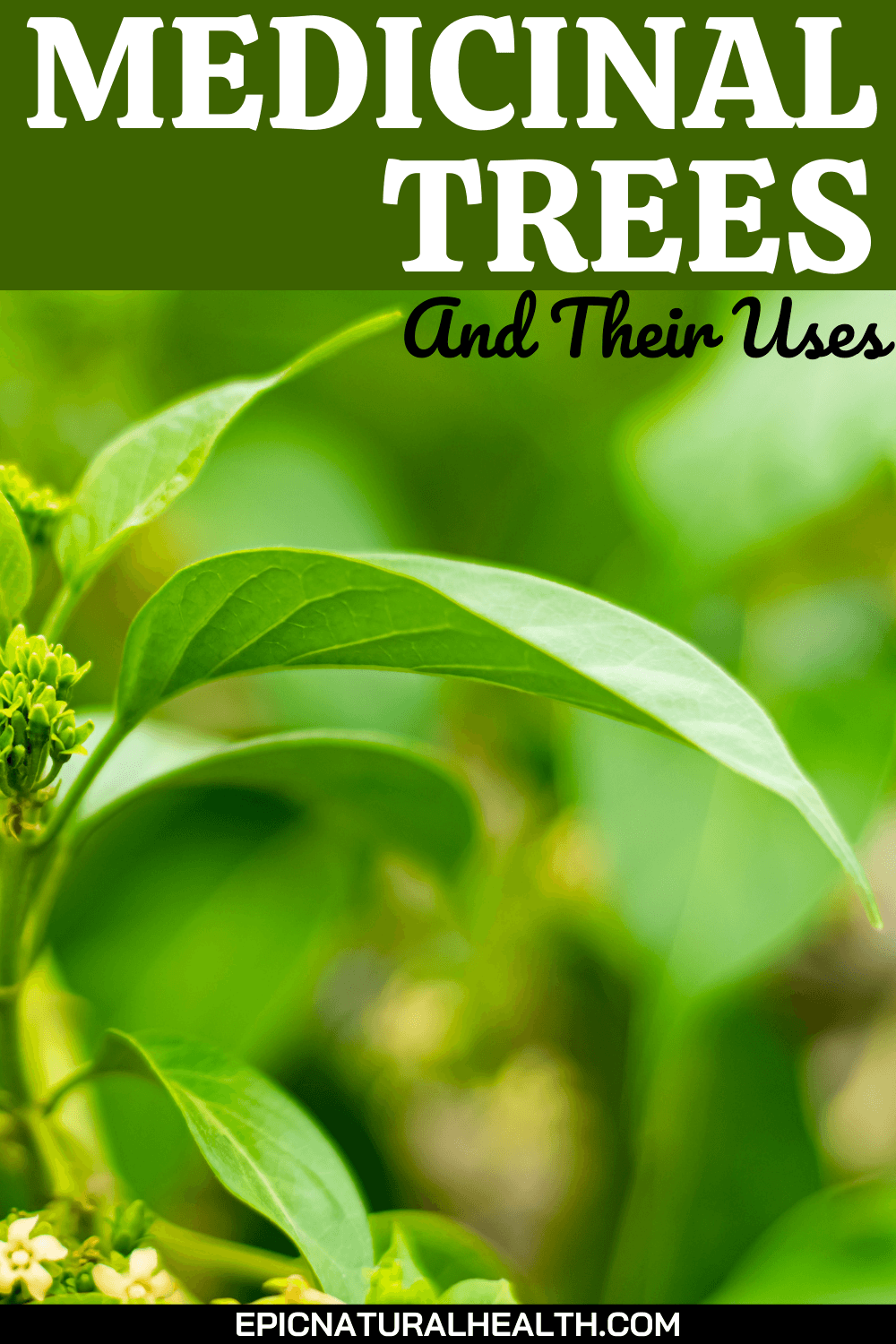 Medicinal trees and their uses