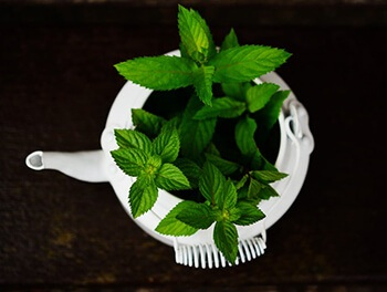 Peppermint can naturally ease muscle cramping