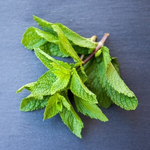 Peppermint contains menthol that relaxes muscles of the respiratory tract
