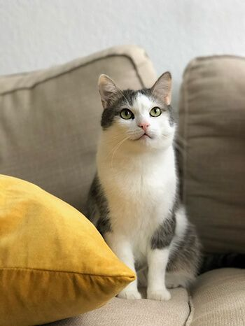 Pets can leave lingering smell in your furniture