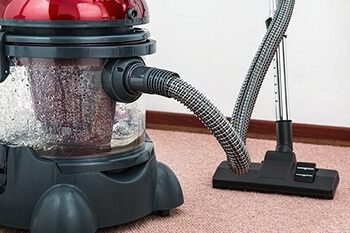 vacuum your entire home to get rid of bugs