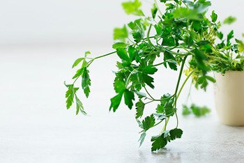 Parsley helps your kidney flush out excess liquids