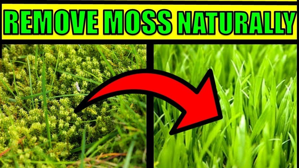 Remove Moss Naturally