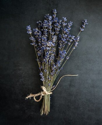 Lavender acts as natural air freshener and wards of mosquitos