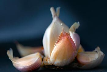 The smell of garlic is usually unpleasant to mosquitoes