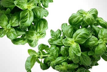 basil leaves can give instant relief from acidity