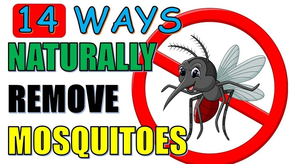 ways to naturally remove mosquitos