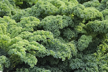 add protein rich foods to your diet like kale