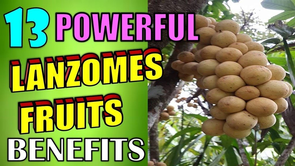 powerful lanzomes fruits benefits