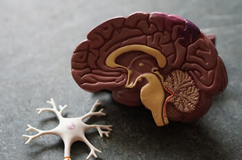 curry leaves extract is a stimulator for the brain