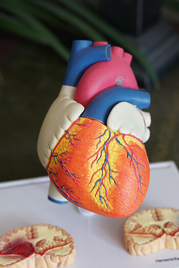 has heart healthy benefits because of its antioxidants