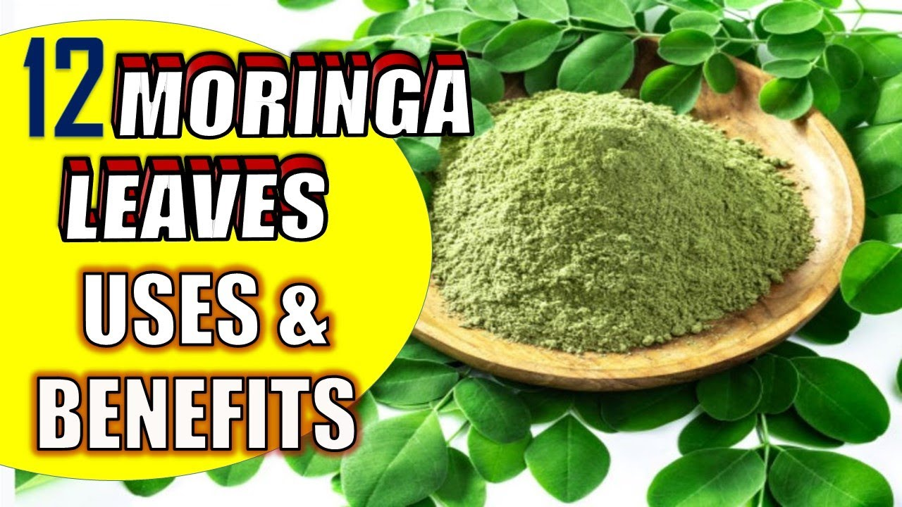 moringa leaves uses and benefits