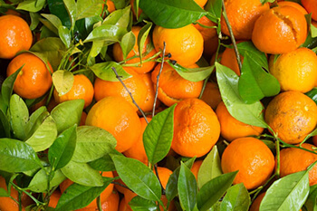 vitamin C in tangerines can support bodys iron absorption
