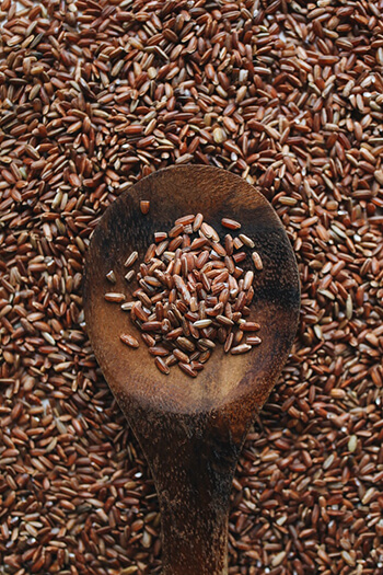 brown rice protein from brown rice